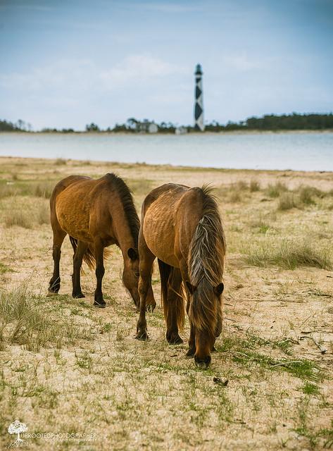 2. Cape Lookout National Seashore