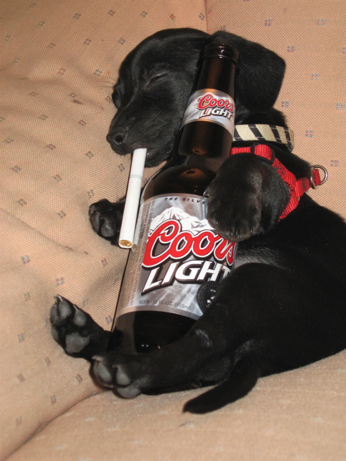 6. This photo is kinda funny, but I can't help feeling sorry for the puppy. Poor thing!!! He's far too young to be taking up drinking and smoking.