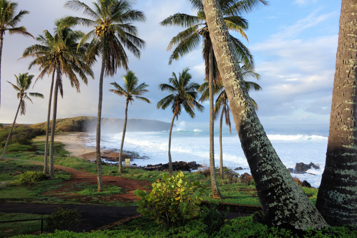 14) Palm trees, and ocean breezes.