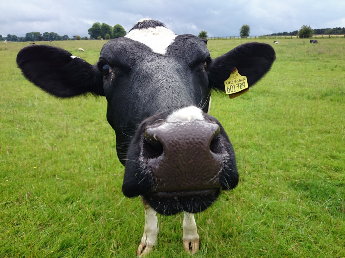 7) Cow tipping—because we definitely don't do that here.