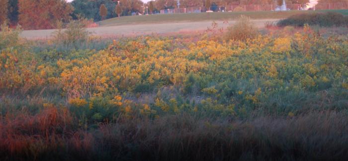 Eastern Saline Wetlands, Lincoln