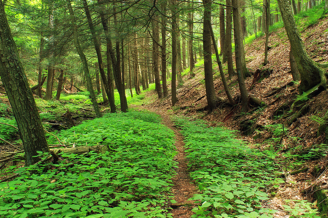 3. Golden Eagle Trail, Lycoming County