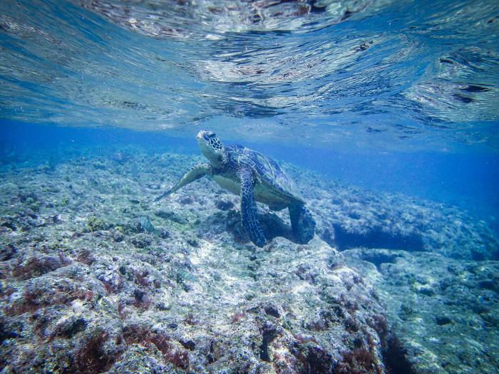15) The spectacular sea life.