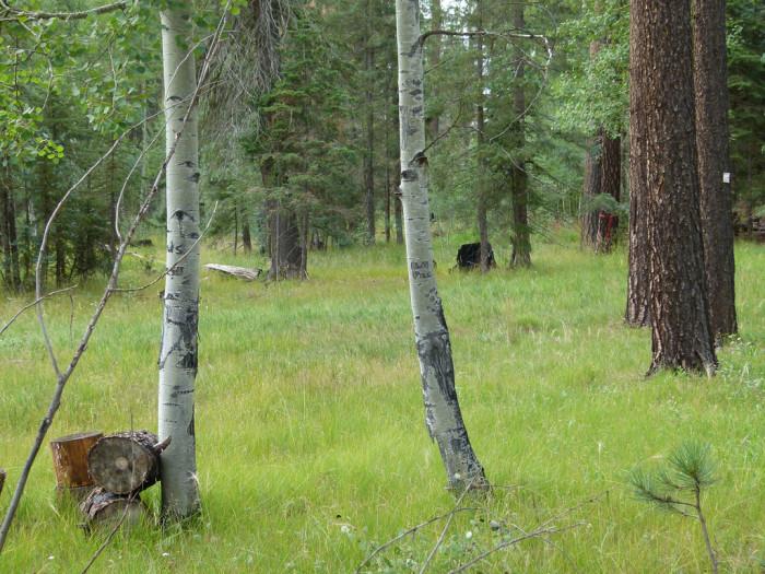 4. Hannagan Meadow Campground