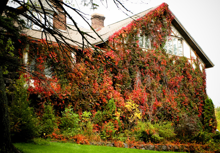 This Ivy Covered House Is Absolutely Stunning. Can You Picture The View  From Inside?