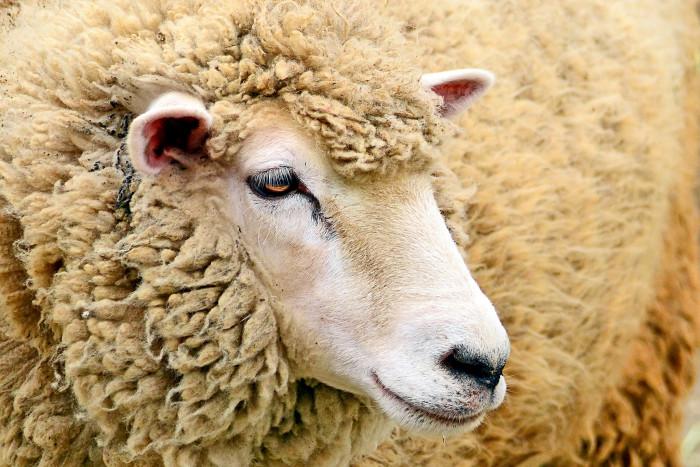 3) Cedar City Livestock and Heritage Fest
