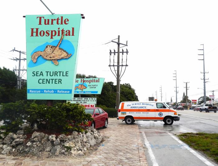 5. Turtle Hospital