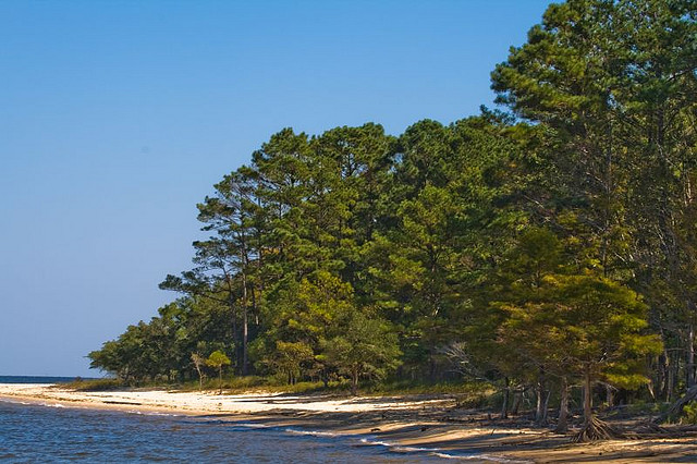 12. Croatan National Forest Trails