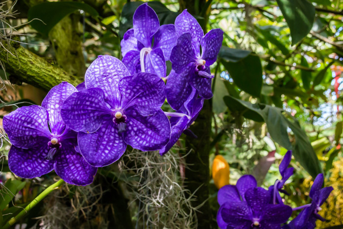 3. Marie Selby Botanical Gardens