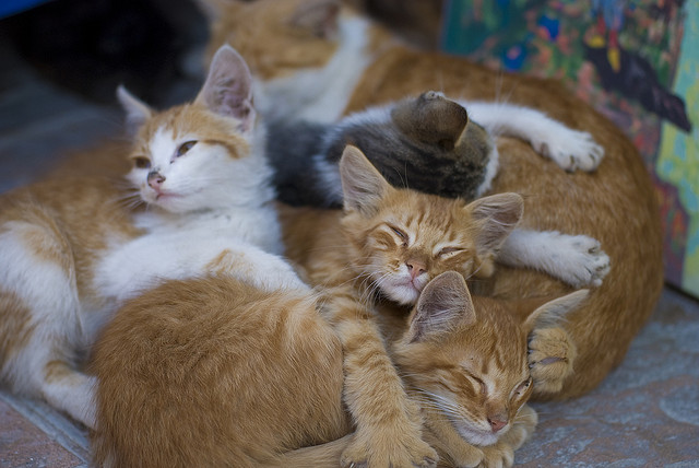 5. Animal Control rescues 122 cats from Pennsylvania residence.