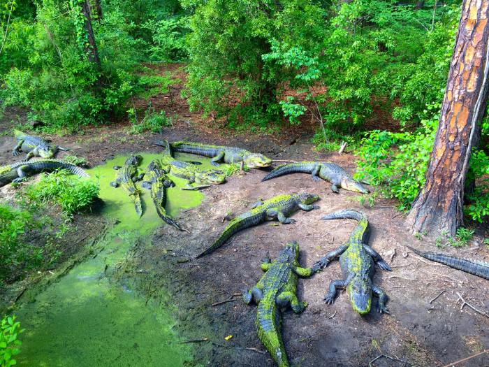 6) Chehaw Wild Animal Park