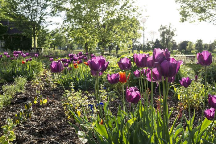 Loring Park Gardens, Minneapolis