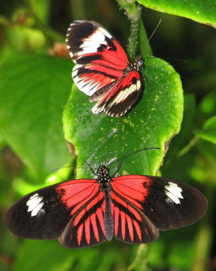 12. Butterfly World