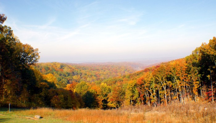 5. Beautiful picture of Indiana State Forest with incredible autumn colors in the trees.