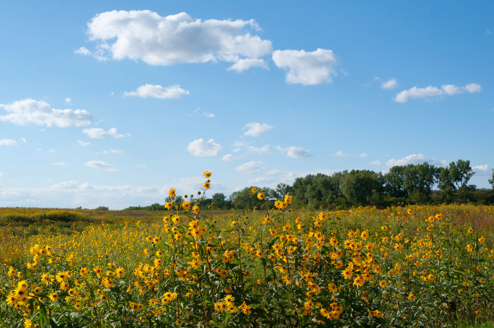 1. Pick a bouquet of wildflowers in one of Iowa's many prairies.