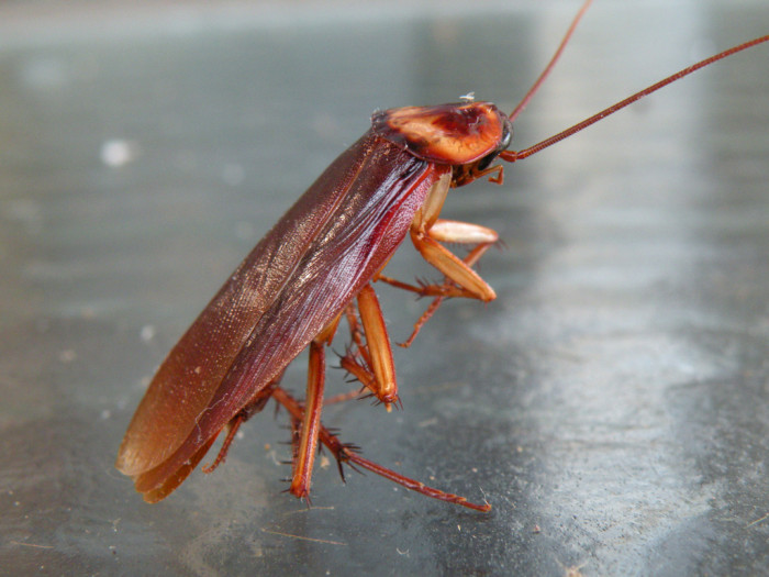 2) Cockroaches…the size of your palm.