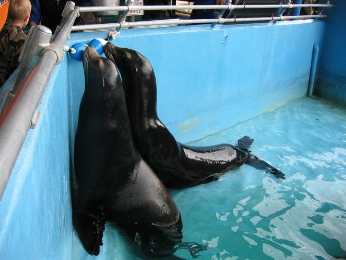 2. Marine Life Oceanarium, Gulfport