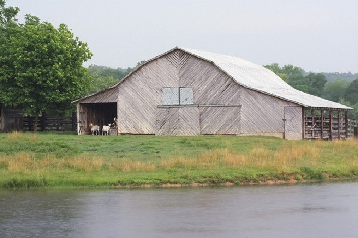 10. Located in Calhoun County, this lovely white barn is being used by a group of goats to escape the rain.