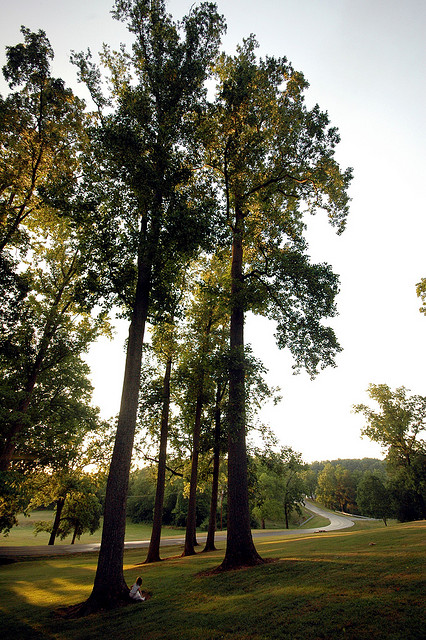 1. Beat the heat! Wake up early and take a walk on a gorgeous trail.
