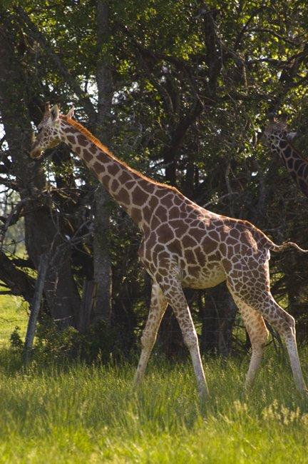2. Tupelo Buffalo Park and Zoo, Tupelo