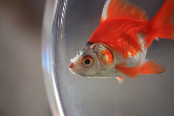 3. It is illegal to get a fish drunk.