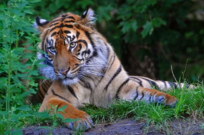 10. In Canton, if one loses their pet tiger, they must notify the authorities within one hour.