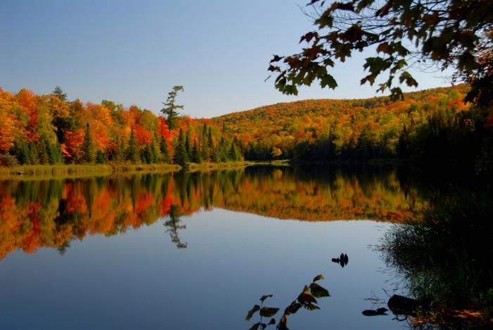 2) Fall Colors