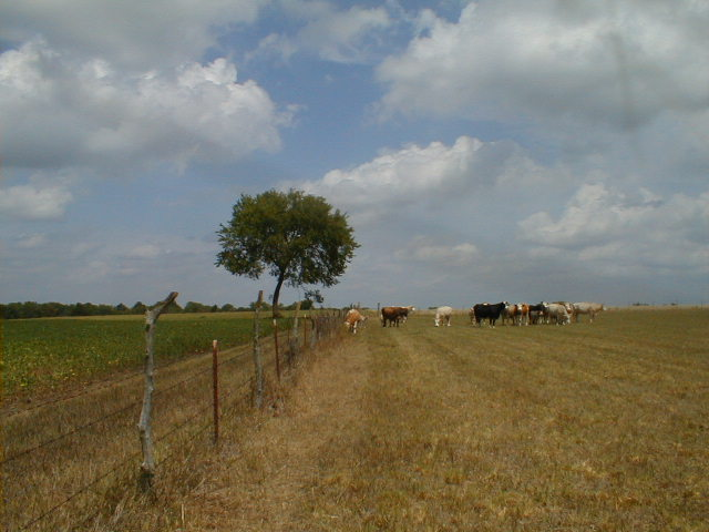 3. Crops on the left, cows on the right.  Cole Camp, MO