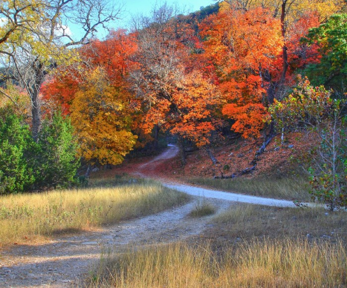 7) Lost Maples State Natural Area