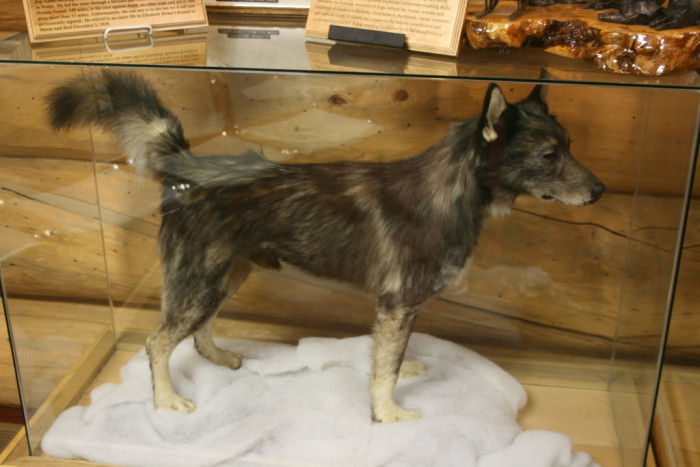 3) Togo The Stuffed Wonder Dog