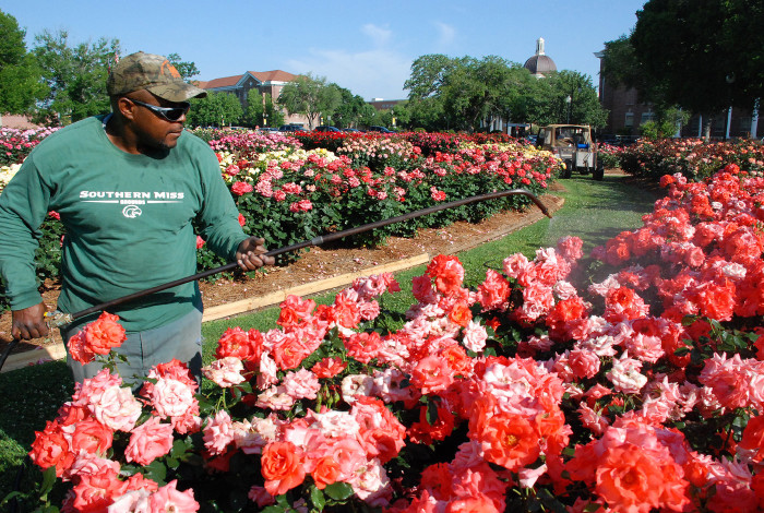 3. The University of Southern Mississippi All-American Rose Garden, Hattiesburg