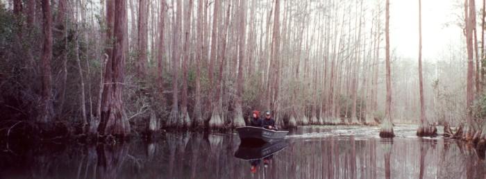 1) Okeefenokee Swamp