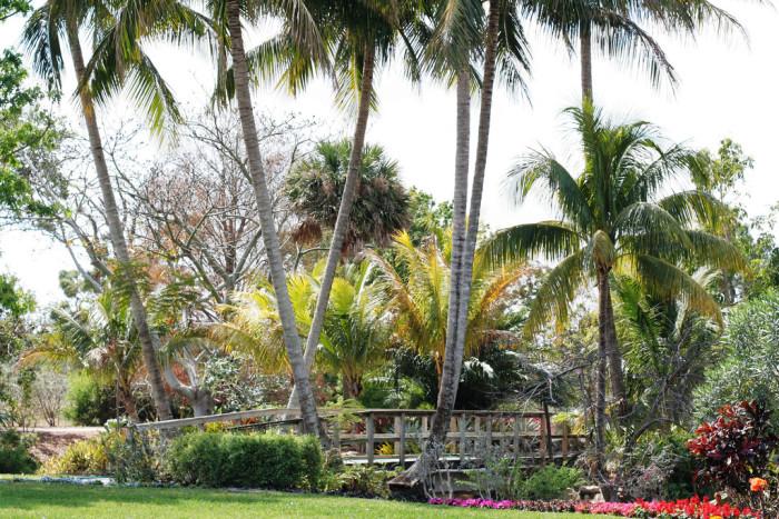 11. Mounts Botanical Garden