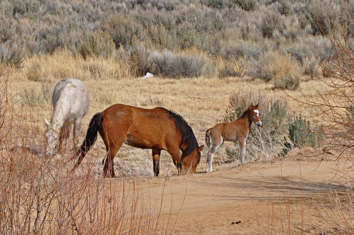 8. We LOVE our wild horses and burros!