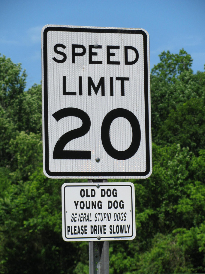 9. Well, that should pretty much sum it up. DON'T SPEED!!!