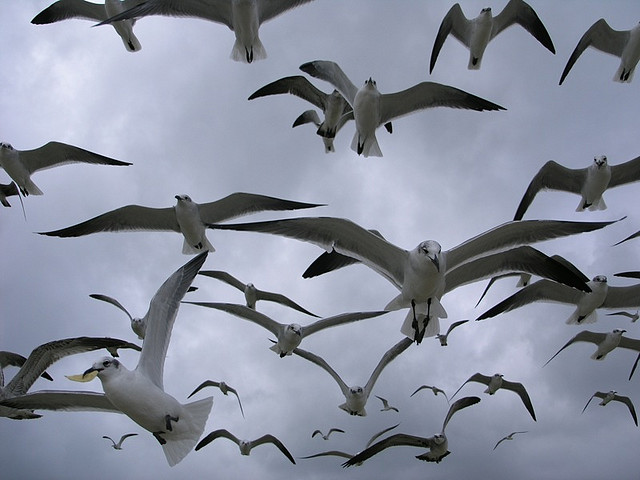 15. There's not a drop of love in your heart for seagulls.