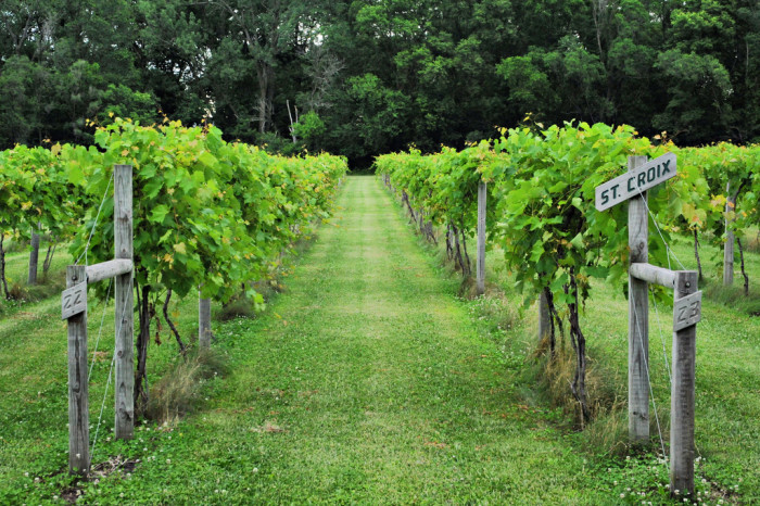 3. Take a tour of White Oak Vineyard in Cambridge, and sample some local wine.