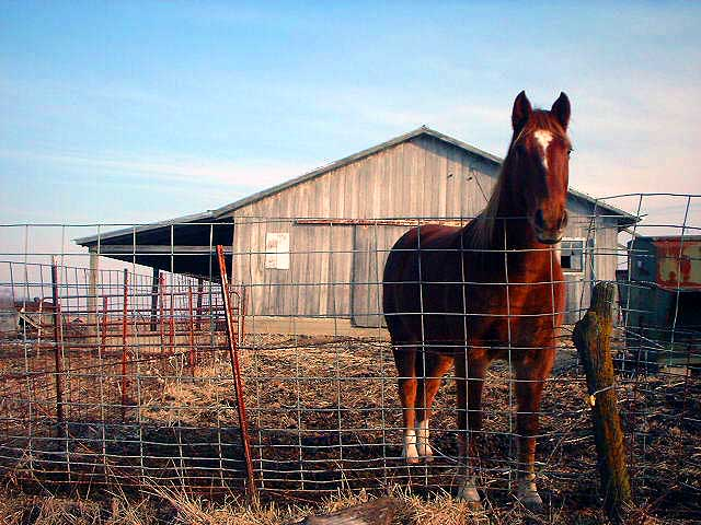4.  Couldn't resist including this beautiful horse from Smithson Farm in La Plata.
