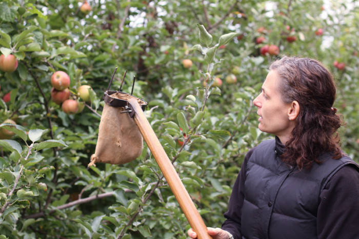 Fall isn't fall until you've picked your own apples.