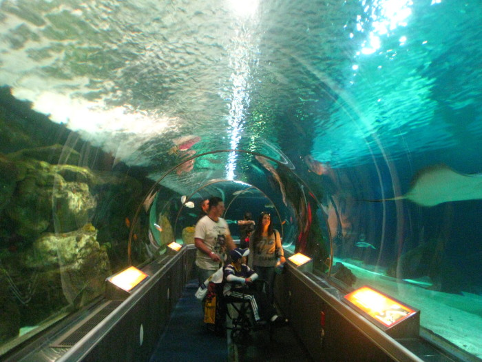 5. Go to the aquarium! Enjoy the beauty of water without being hit by falling drops!