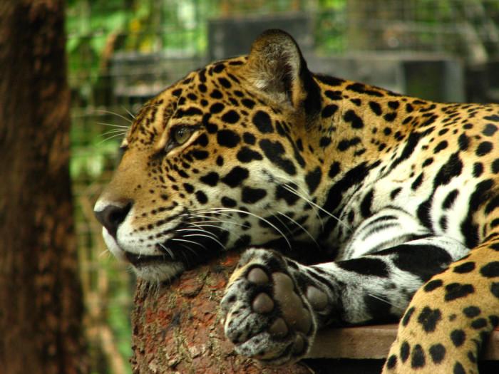 3. Brevard Zoo
