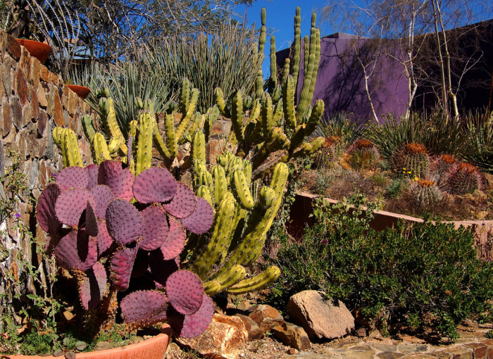 Here Are The 8 Most Beautiful Gardens You Ll Ever See In Arizona