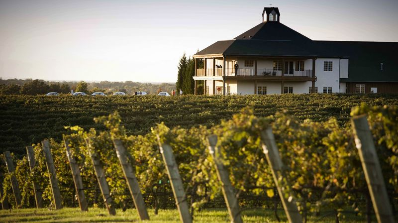 Wineries In Massachusetts And Rhode Island