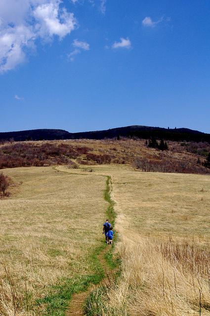 13. Flat Laurel Creek Trail, 2.5 mi.