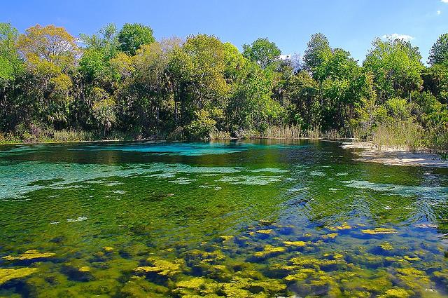 12. Ocala National Forest, Alexander Springs