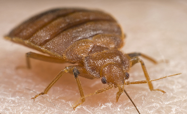 2. Allegheny County spends $12,000 to eradicate single bed bug.