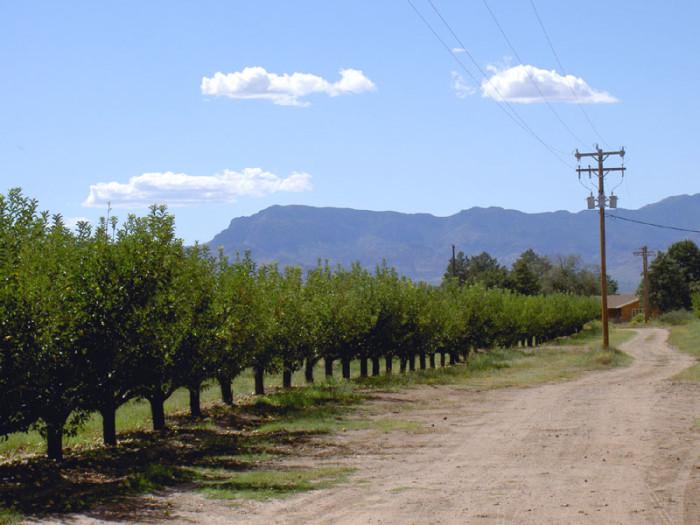 1. Apple Annie's Orchard Farms, Willcox