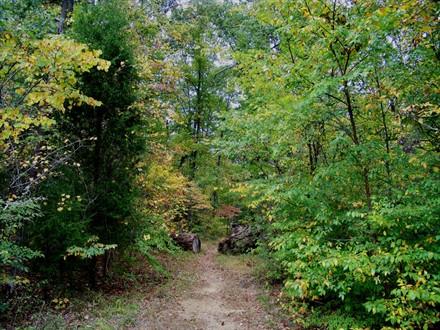 6. Uwharrie/Dutchman's Creek Trail Loop, 12.0 mi.