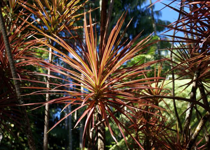 5) Hawaii Tropical Botanical Garden
