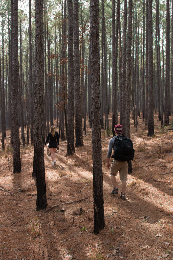5. The Clear Springs Recreational Area Trails in the Homochitto National Forest